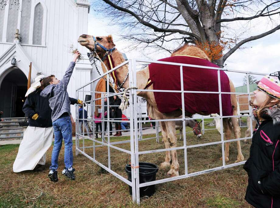 Will Messina, 9, of Greenwich, feeds hay to a camel at First United Methodist Church during the Greenwich Holiday Stroll Weekend event  in central Greenwich, Conn., Saturday, Dec. 3, 2016. Local churches participated in the event along with 125 Greenwich Merchants who provided holiday cheer with free samples of their products. There was a live Nativity at First United Methodist Church along with live animals featuring the camel pictured here. There was also live music by Barbara's Serenade, a trio. There were also horse-drawn carriage rides down Greenwich Avenue from Amogerone Crossway. Sunday hours for the event are noon to 5 p.m. Photo: Bob Luckey Jr. / Hearst Connecticut Media / Greenwich Time