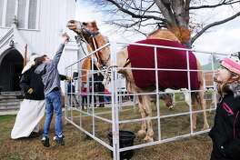 Will Messina, 9, of Greenwich, feeds hay to a camel at First United Methodist Church during the Greenwich Holiday Stroll Weekend event  in central Greenwich, Conn., Saturday, Dec. 3, 2016. Local churches participated in the event along with 125 Greenwich Merchants who provided holiday cheer with free samples of their products. There was a live Nativity at First United Methodist Church along with live animals featuring the camel pictured here. There was also live music by Barbara's Serenade, a trio. There were also horse-drawn carriage rides down Greenwich Avenue from Amogerone Crossway. Sunday hours for the event are noon to 5 p.m.