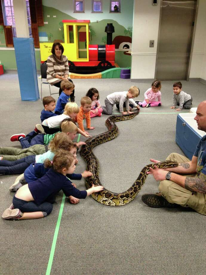 Students at Greenwich Christian Preschool got a chance to see Riverside Reptiles up close as a birthday treat by one of the youngsters. Among the creatures was an 80-pound python, a giant frog and an alligator. Photo: Contributed