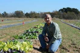 Dr. Joe Masabni, Texas A&M AgriLife Extension Service horticulturist, Overton, kneels beside a row of winter vegetables at the AgriLife Research and Extension Center's North Farm.