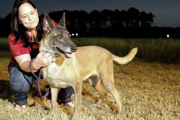 """Mission K9 Rescue Co-Founder Louisa Kastner and """"Jodi"""" who is  one of 13 retired bomb detection dogs returning to the U.S. from Kuwait at George Bush International Airport cargo facility Dec. 1, 2016, in Houston. ( James Nielsen / Houston Chronicle )"""