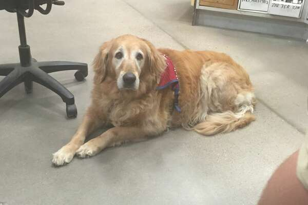 """Human Resources Manager Jay Fellers said he was unaware the 35-year-old veteran had a service dog until he showed up for an interview, but that wasn't an issue """"at all."""" Luthy was a top candidate during the interview process, eventually landed the job and has been a """"great asset"""" to the store for the past three months, Fellers added."""