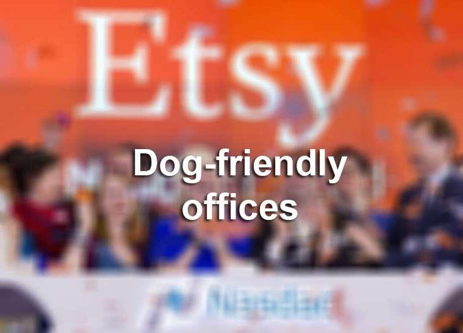 Dog-friendly offices across the U.S. Photo: Mysa