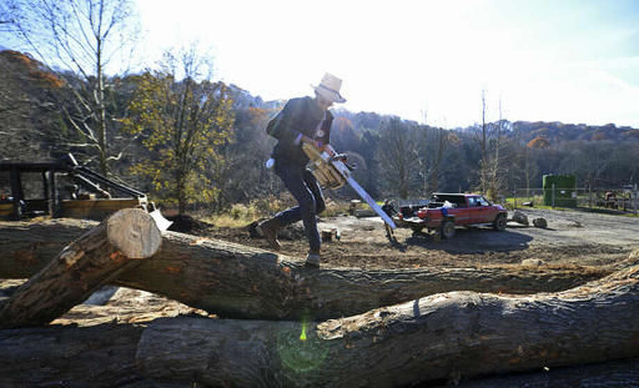 In this Tuesday, Nov. 15, 20156 photo, Allen Miller, of Dayton, scales a pile of rough timer while logging in Lower Burrell, Pa. (Louis B. Ruediger /Pittsburgh Tribune-Review via AP) Photo: Louis B. Ruediger | Tribune-Review
