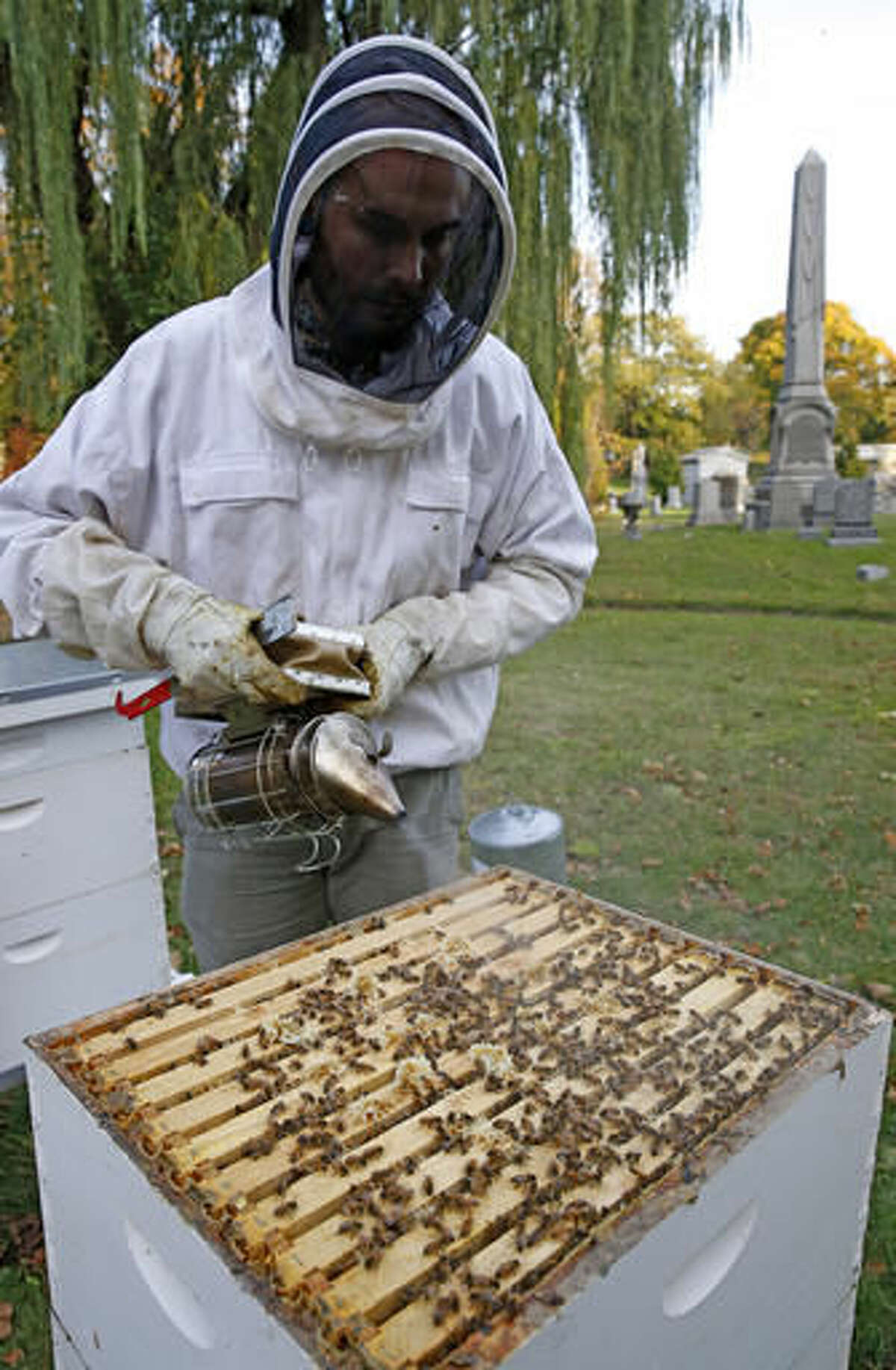 """In this Nov. 2, 2016 photo, beekeeper Davin Larson, 30, gently uses a smoker to calm honeybees after opening a hive to inspect it for mites, general health and good levels, at Brooklyn's Green-Wood cemetery, a national historic landmark, in New York. Larson, who has worked around bees for 24 years, maintains six hives, each containing approximately 40,000 bees at the 485-acre cemetery. While attending a classical music concert at the Green-Wood's central chapel, Larson realized the cemetery, with it's plentiful flowering plants and trees, ponds, and 24-hour security """"had to be a perfect place to keep bees in the city."""" (AP Photo/Kathy Willens)"""