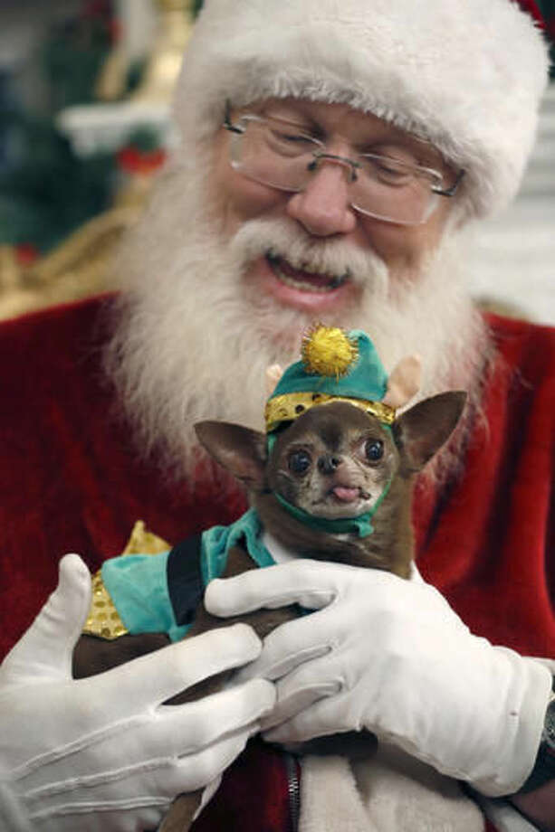 In this Thursday, Nov. 10, 2016 photo Chloe Kardoggian, a 12-year old rescue chihuahua, poses for a photo with Santa wearing a guinea pig elf costume during the PetSmart holiday collection preview in New York. More than half of dog owners and nearly 40 percent of cat owners buy their pets gifts for Christmas or Hanukkah, according to the American Pet Products Association, an industry trade group. (AP Photo/Mary Altaffer)