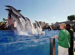 Colorado State football players Nate Kvamme, left, and Damon Washington gets a front row view during the dolphin show at Sea World's Dolphin Stadium Wednesday Dec. 24, 1997 in San Diego. The show was part of Holiday Bowl Day at the marine park. Colorado State meets Missouri in the Holiday Bowl on Monday.  (AP Photo/Denis Poroy)