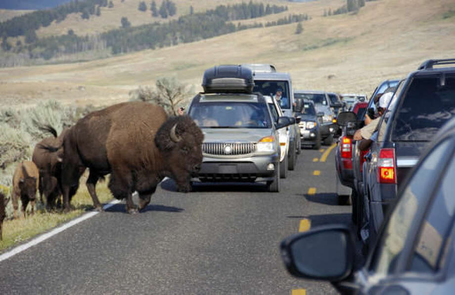 FILE - In this Aug. 3, 2016, file photo, a large bison blocks traffic as crowds of tourists take photos in the Lamar Valley of Yellowstone National Park, Wyo.  (AP Photo/Matthew Brown, File)