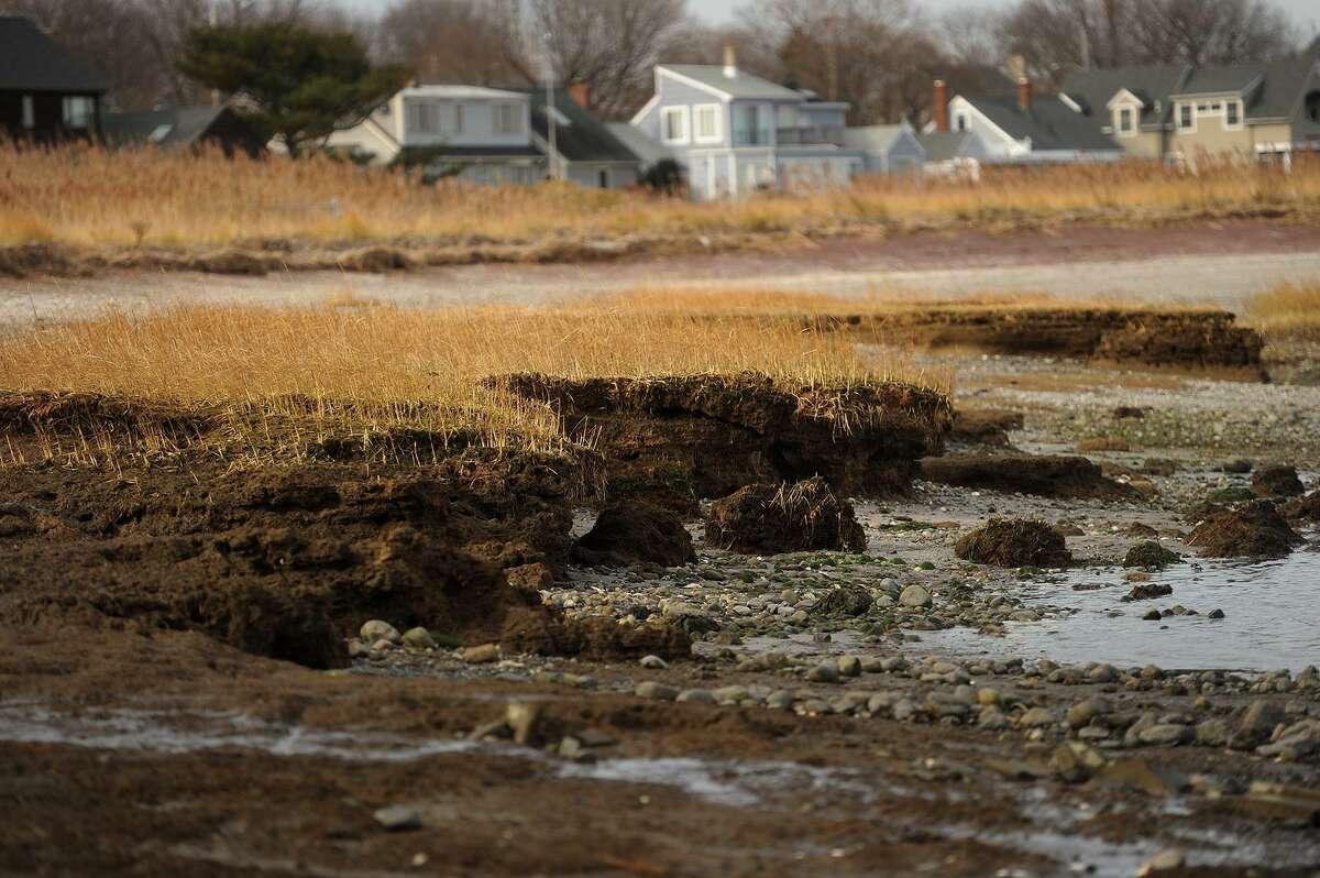 Erosion of the marsh along the shoreline in Stratford