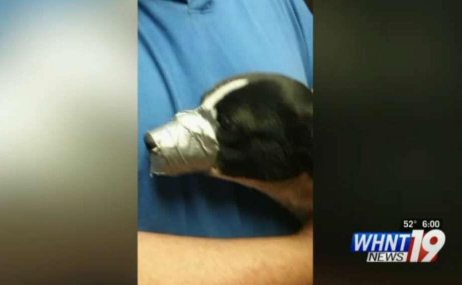 Shanda Parker found her family's dog with duct tape around his mouth and legs. An investigation is underway to determine who committed this crime in Huntsville, Ala.