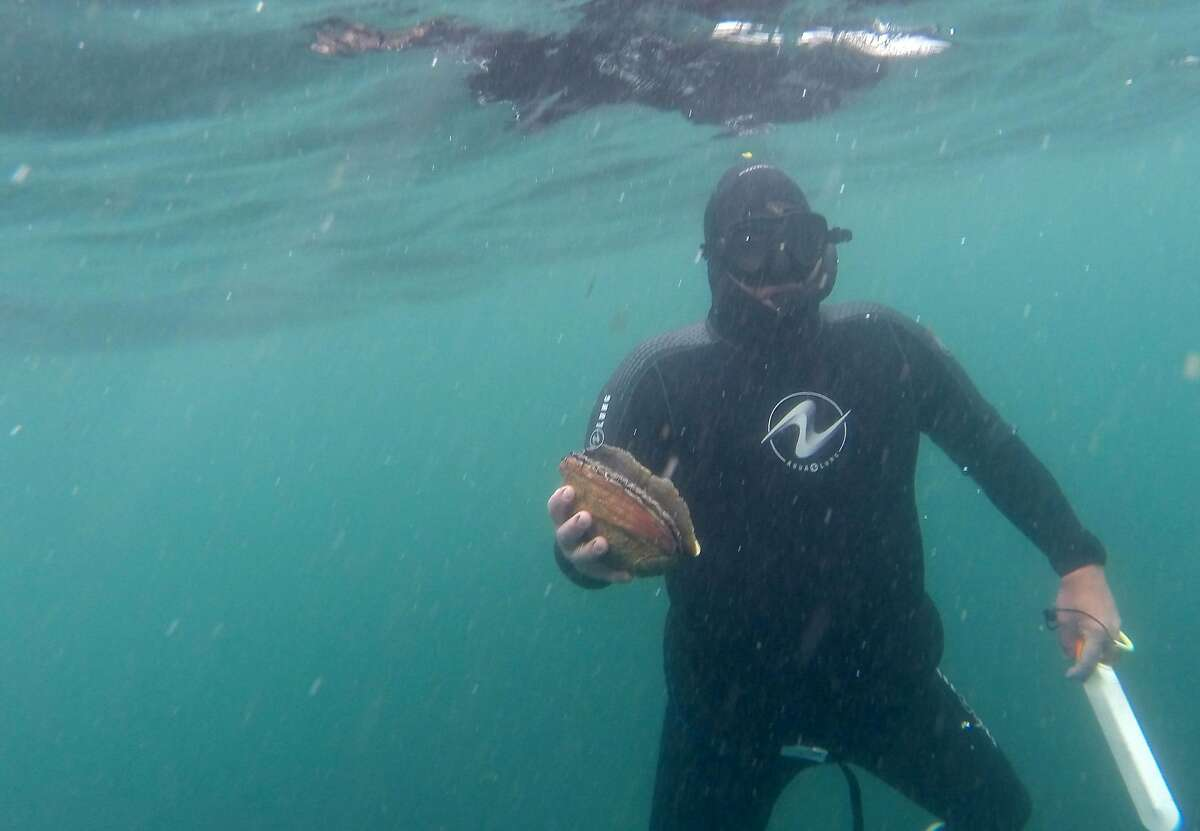 DCIM\116GOPRODive instructor Tom Stone comes up with an abalone at Salt Point State Park in Sonoma County on Saturday, May 2, 2015.