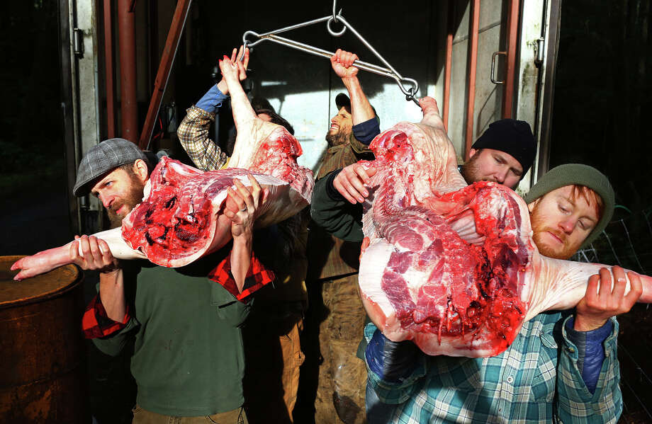Students carry the halves into the walk-in refrigerator for the night.    In 2010, Brandon and Lauren Sheard opened Farmstead Meatsmith on their property on Vashon Island. They offer small-scale abattoir, butchery and charcuterie services as well as teach classes on the art of slaughter, butchery and cooking. These photos were taken over the course of a 3-day pig harvesting class, Jan. 14-16, 2016. Photo: GENNA MARTIN, SEATTLEPI.COM