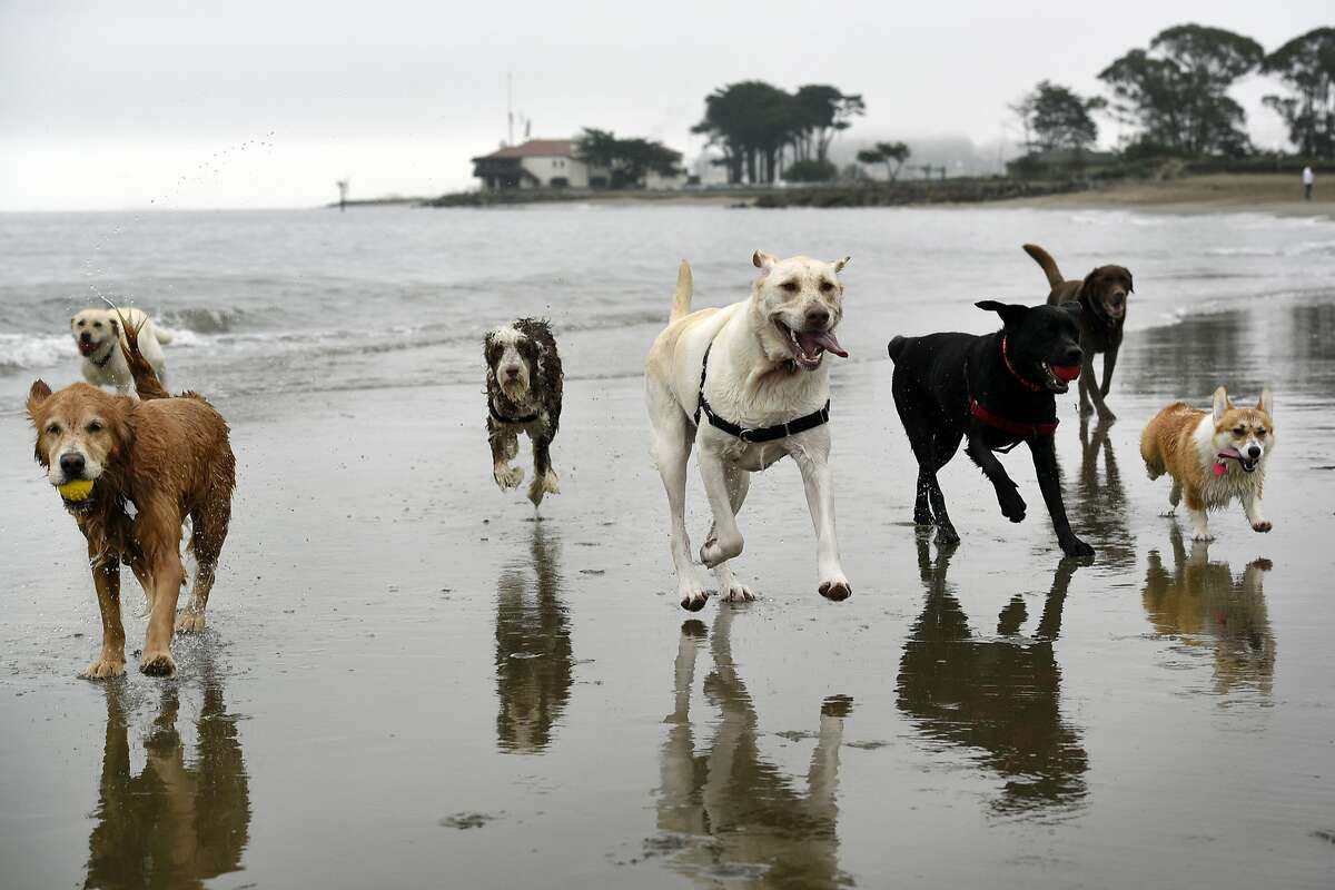 Do you love dogs and being a personal assistant (among other things)? A San Francisco Craigslist ad is drawing internet attention for its job description and list of ideal employee qualities.