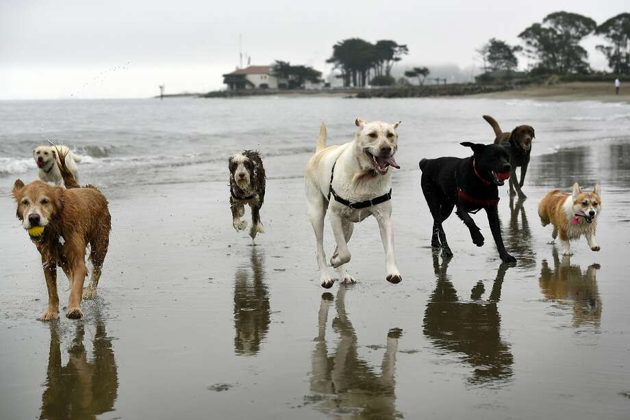 Do you love dogs and being a personal assistant (among other things)? A San Francisco Craigslist ad is drawing internet attention for its job description and list of ideal employee qualities. Photo: Michael Short, Special To The Chronicle