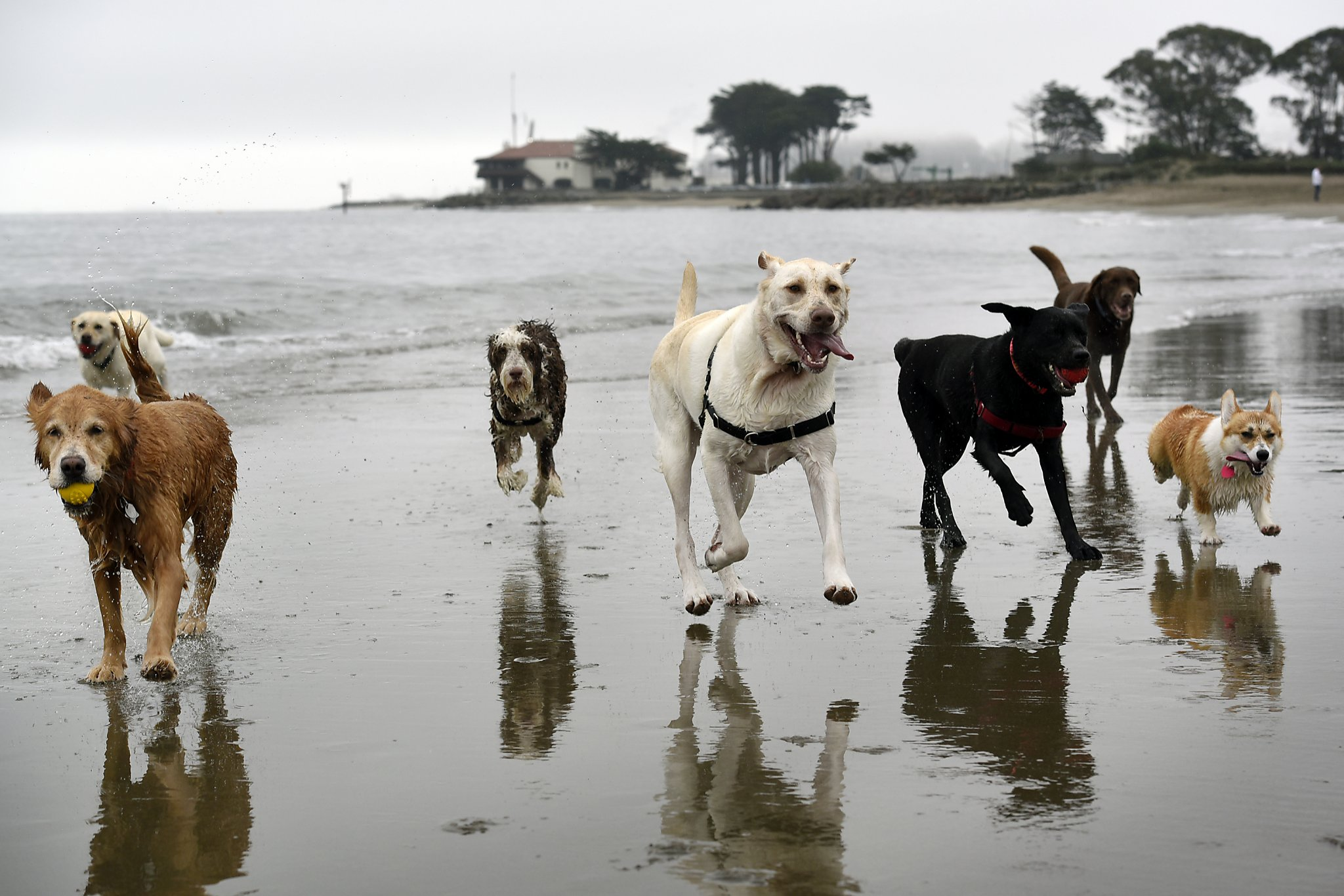 Must love dogs: Is this viral SF Craigslist ad for real?