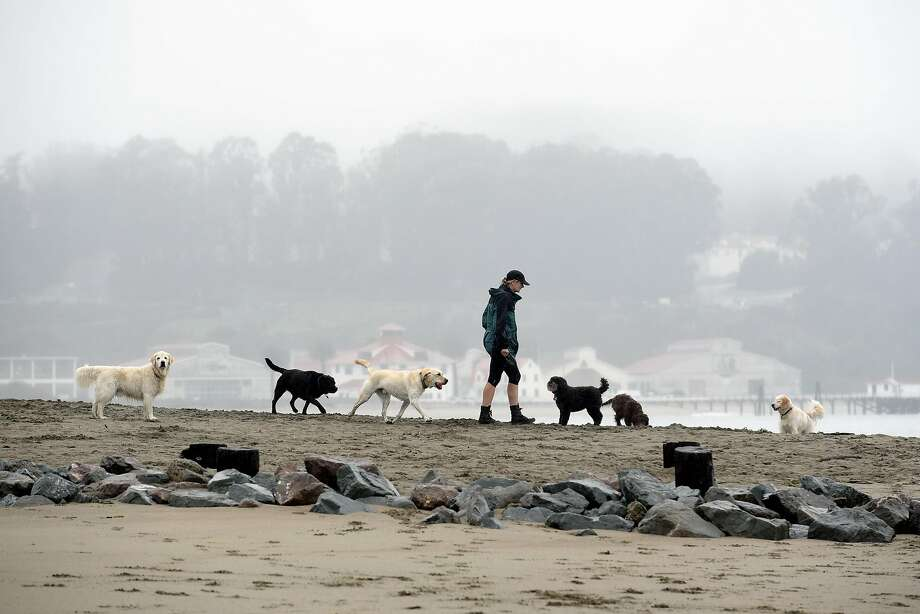 A woman walks dogs on a beach that was part of the land under review by the National Park Service. Photo: Michael Short, Special To The Chronicle