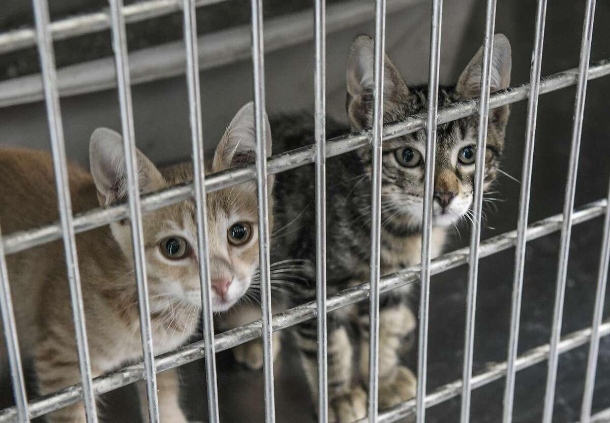 Pets up for adoption at the Laredo Animal Care Facility react to the presence of people on Thursday afternoon during a tour of the facility.