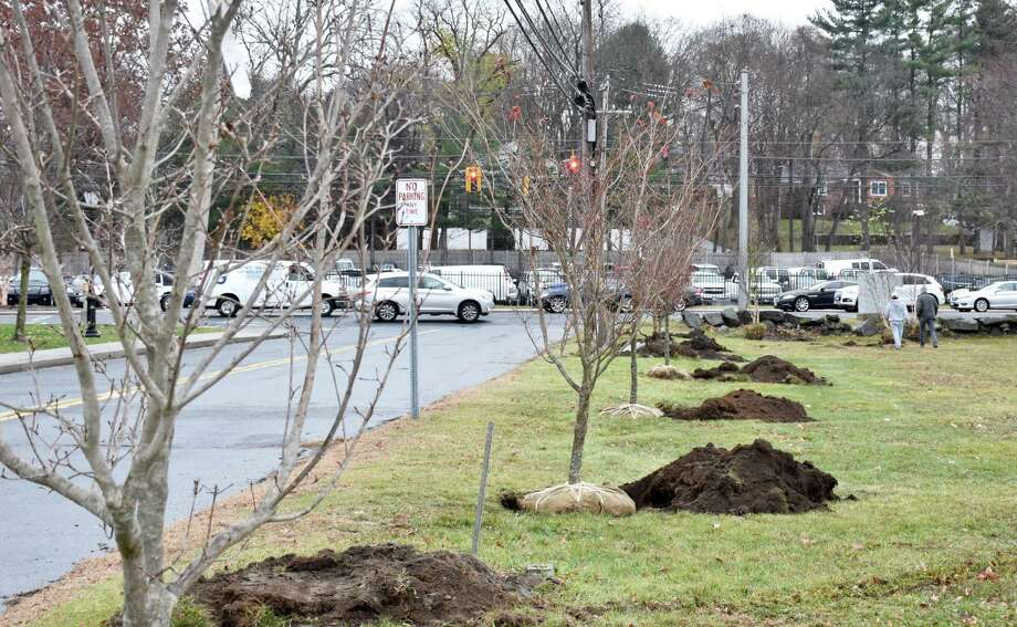 The Tree Conservancy of Darien recently planted 25 trees at the Spring Grove and Veteran's cemeteries. Photo: Contributed / Contributed Photo