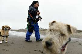 "Professional dog walker Angela Gardner who works under the company name ""All About Paws"", walks a group of dogs on on a section of East Beach that will be totally off limits for dogs when new Golden Gate National Recreation Area dog management plans go into effect next year, at Crissy Field in San Francisco, CA, on Thursday, December 8, 2016."