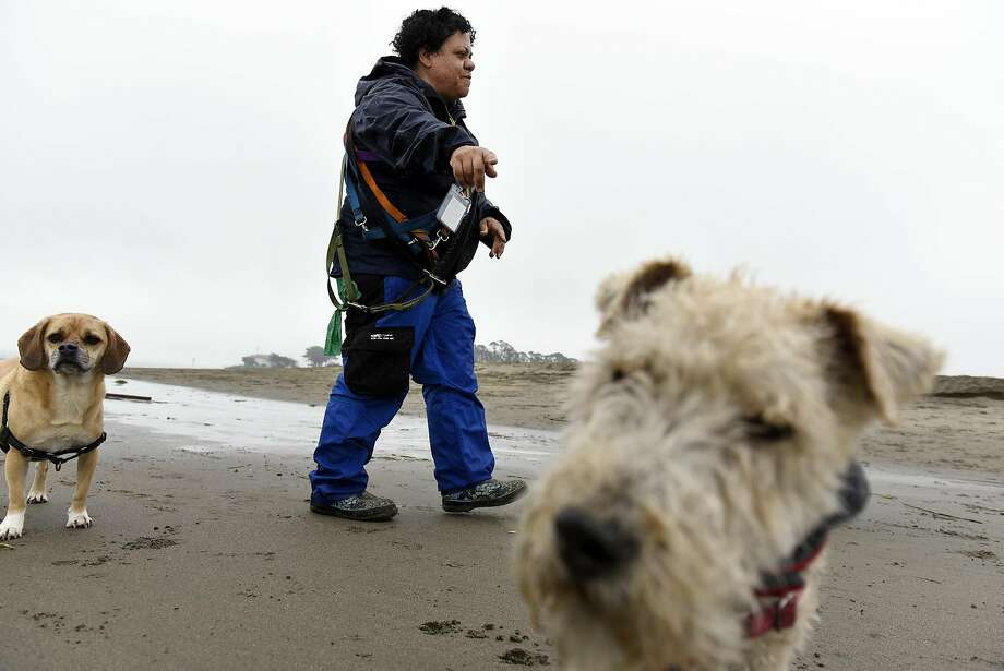 "Professional dog walker Angela Gardner who works under the company name ""All About Paws"", walks a group of dogs on on a section of East Beach that will be totally off limits for dogs when new Golden Gate National Recreation Area dog management plans go into effect next year. Photo: Michael Short, Special To The Chronicle"