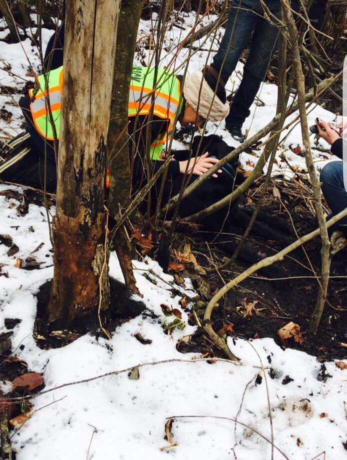 Osi, a black lab, was found here in the woods of Clifton Park, eight days after being hit by a car. (Photo submitted)