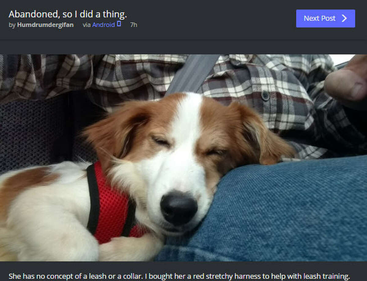 A Dallas pup is happily living in her new forever home after her previous owners left her behind when they were evicted from their apartment.>>KEEP CLICKING TO SEE WHICH PET BREEDS ARE BEST FOR FAMILIES.Photo: @Humdrumdergifan Post Screenshot