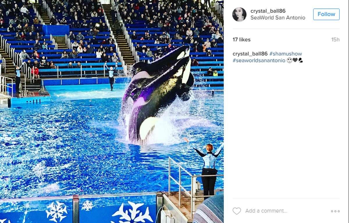 "5. SeaWorld San Antonio @crystal_ball86: ""shamushow"""