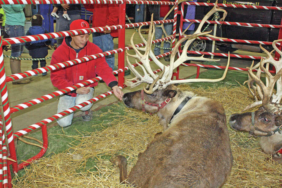 Owner Nick Militello feeds the reindeer their favorite snack, a rye cracker, during the live reindeer display at the weekend's Dickens of a Christmas in Deckerville.