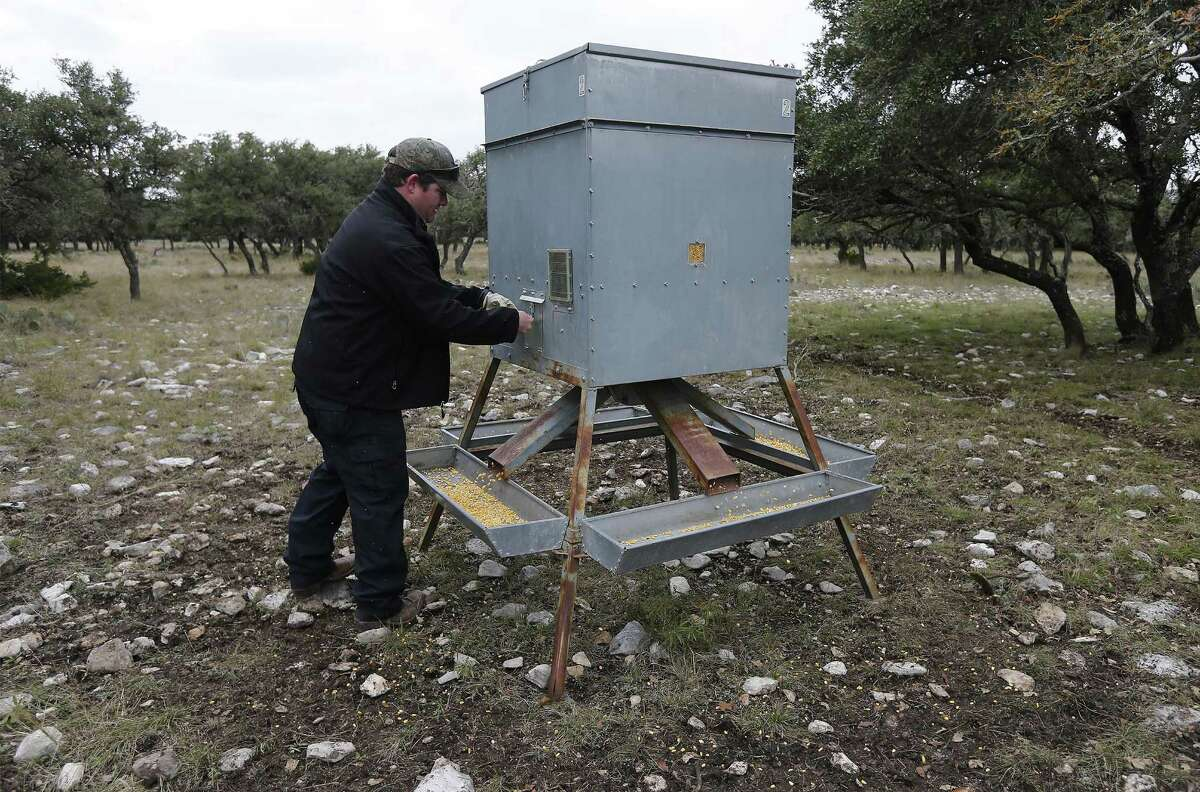 Texas Hunt Lodge owner Aaron Bulkley turns on a feeder at White Cross ranch to feed his native and exotic game on Thursday, Dec. 8, 2016. The economic downturn in the Eagle Ford has a rippling effect in other businesses including hunting in the Hill Country. For operators like Bulkley whose business comprises of catering to premium hunting of native and exotic game, the fallout meant having to lower his rates. The prices for the hunts start around $1,000 and depending on the animal can reach 10 times that. As Bulkley prepares for the peak of hunting season in the fall and winter, he believes he can weather the downturn by providing quality hunts and exceptional service at his lodge for guests. (Kin Man Hui/San Antonio Express-News)