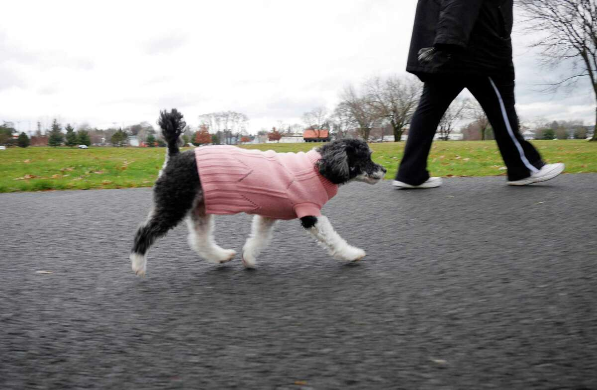 Click through the slideshow to see what you may have missed over the weekend . Linda Moon of Troy takes a walk with her dog, Allie, a parti poodle, through Schuyler Flatts Park on Sunday, Dec. 18, 2016, in Watervliet, N.Y. Moon took in Allie two years ago, getting her through Heaven Sent Animal Rescue. (Paul Buckowski / Times Union)