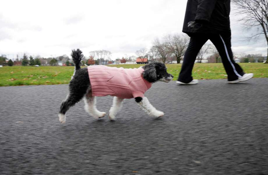 Click through the slideshow to see what you may have missed over the weekend. Linda Moon of Troy takes a walk with her dog, Allie, a parti poodle, through Schuyler Flatts Park on Sunday, Dec. 18, 2016, in Watervliet, N.Y.  Moon took in Allie two years ago, getting her through Heaven Sent Animal Rescue.  (Paul Buckowski / Times Union)
