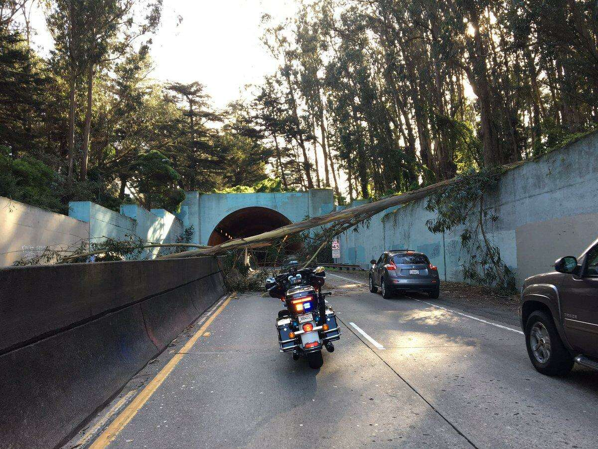 A tree fell across the Park Presidio near MacArthur Tunnel in San Francisco Monday causing a gridlock during the afternoon rush hour.
