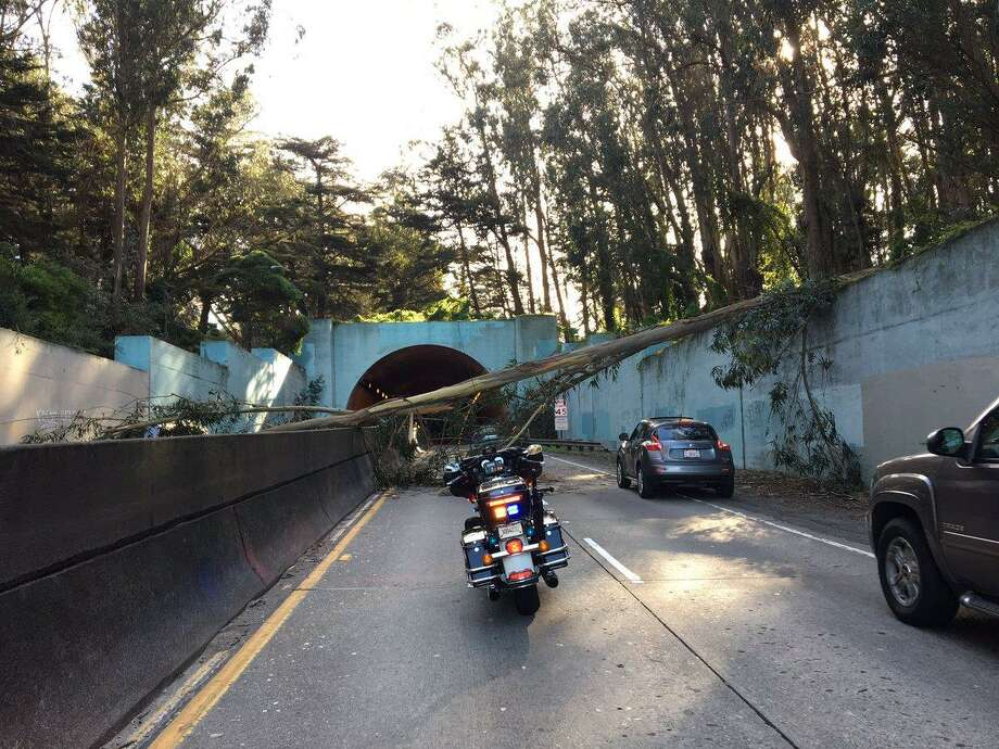 A tree fell across the Park Presidio near MacArthur Tunnel in San Francisco Monday causing a gridlock during the afternoon rush hour. Photo: CHP Marin / Twitter / CHP Marin / Twitter