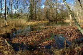 Still Pond as seen in November 2016 at the Silvermine-Fowler Preserve in New Canaan, Conn.