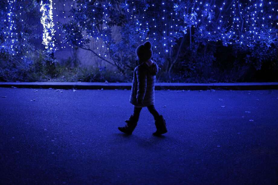 Lucia Bisharat, 5, walks along a lighted wall during the Zoo Lights at the San Francisco Zoo in San Francisco, Calif., on Monday, December 19, 2016. The Photo: Carlos Avila Gonzalez, The Chronicle