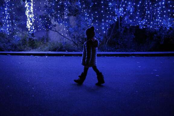 Lucia Bisharat, 5, walks along a lighted wall during the Zoo Lights at the San Francisco Zoo in San Francisco, Calif., on Monday, December 19, 2016. The