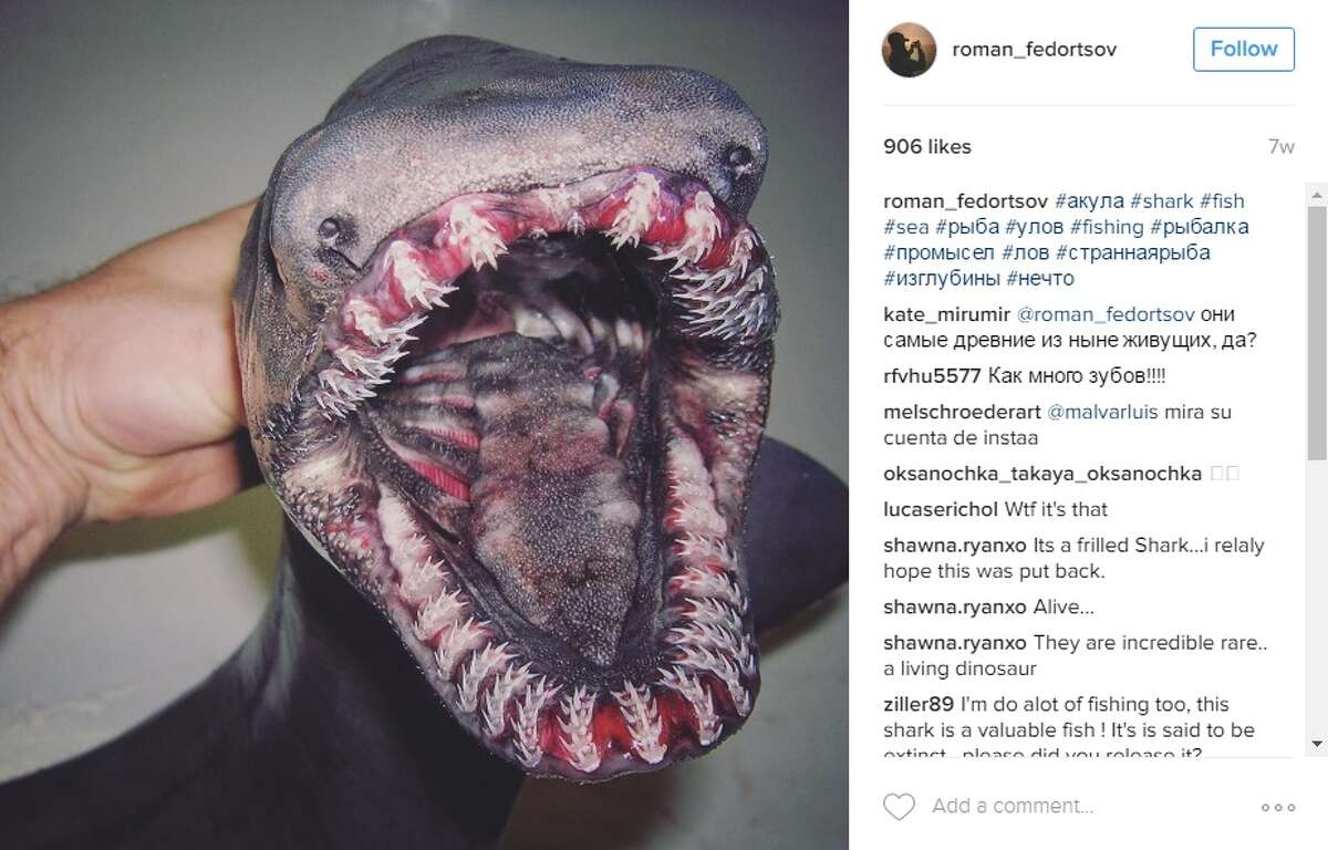 Roman Fedortsov has been making a splash on Instagram (@roman_fedortsov) and Twitter (@rfedortsov) with pictures he has been posting since October of freakish catches caught off the coast of Russia.
