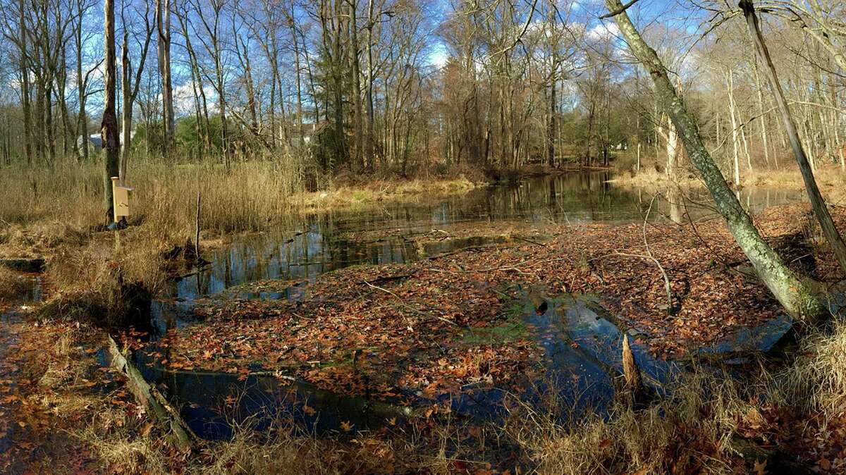 Still Pond as seen in November at the Silvermine Fowler Preserve in New Canaan.
