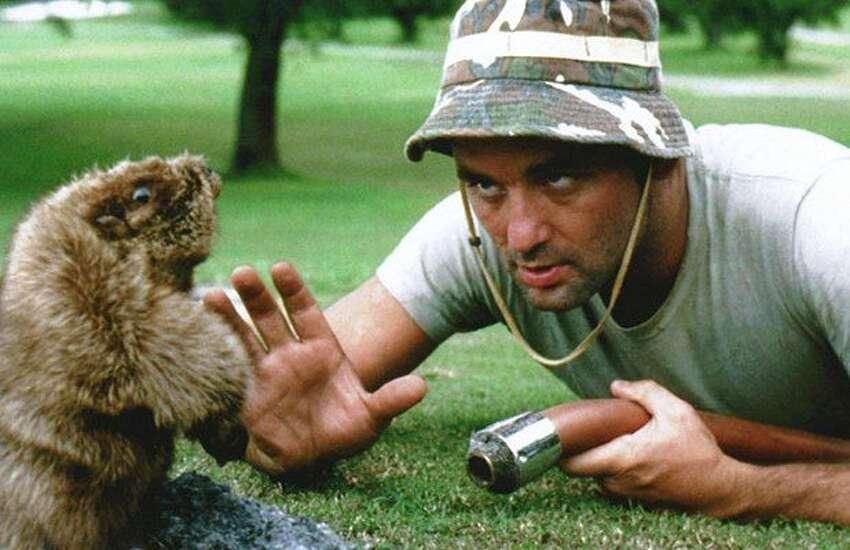 Caddyshack 1980 Rotten Tomatoes audience score: 88