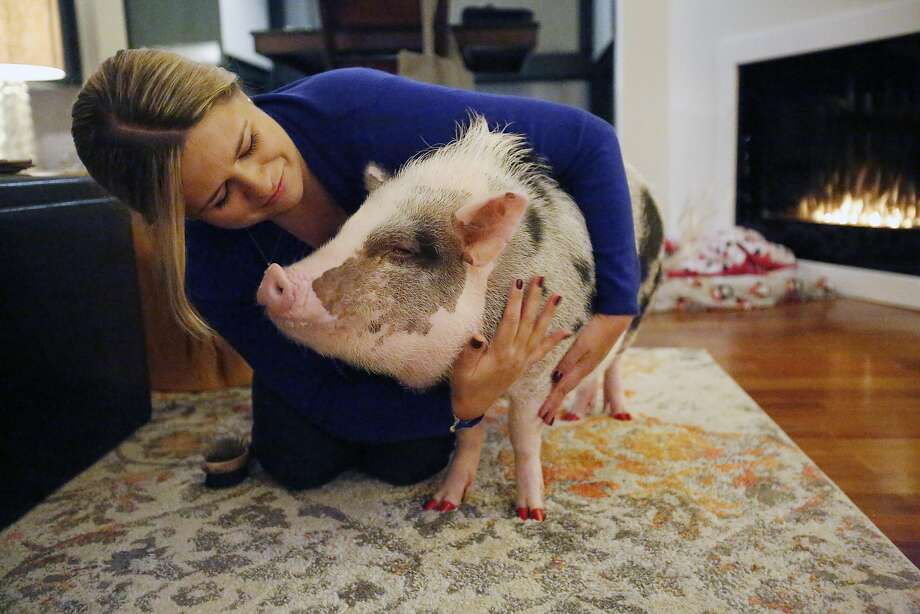 Tatyana Danilova cuddles LiLou at their home in San Francisco. Photo: Kathleen Duncan / The Chronicle