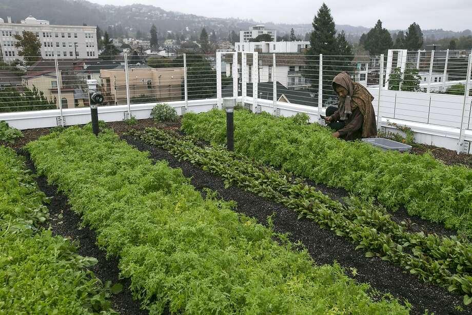 Uc Berkeley Garden Village Apartments