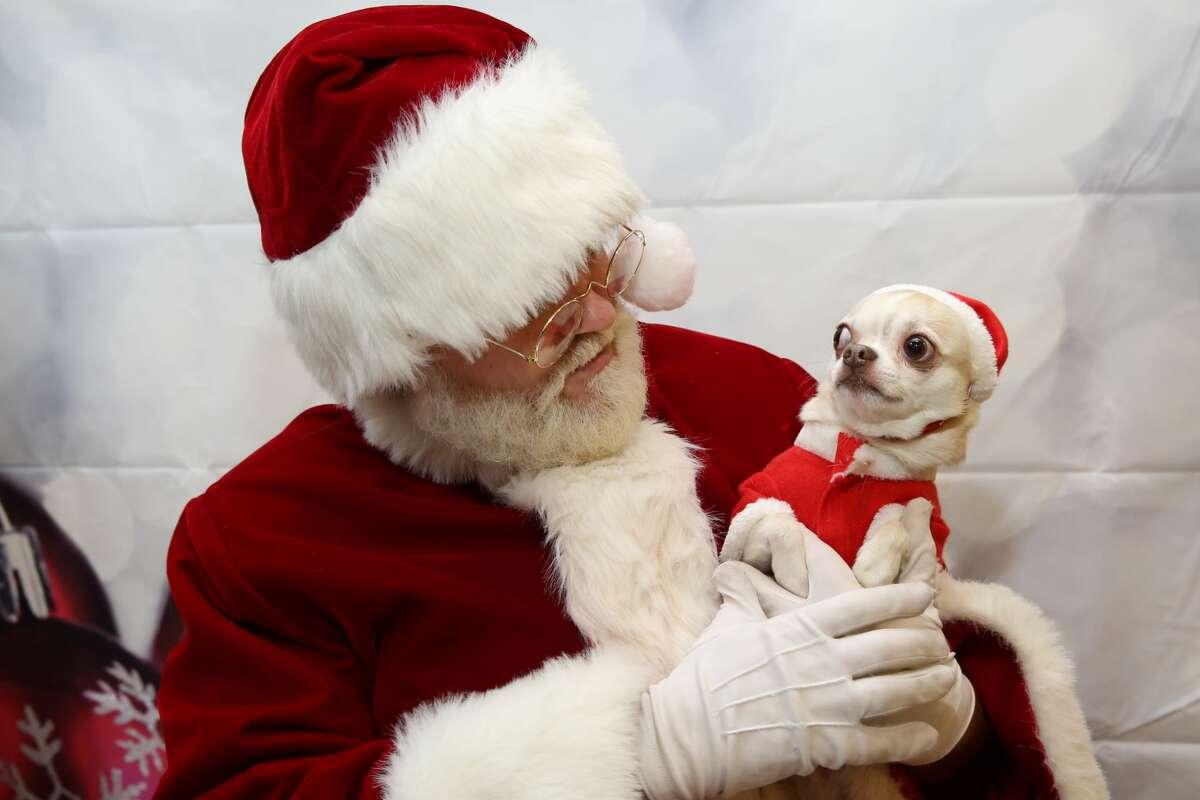 PetSmart shares its hilarious, adorable pet photos with ...