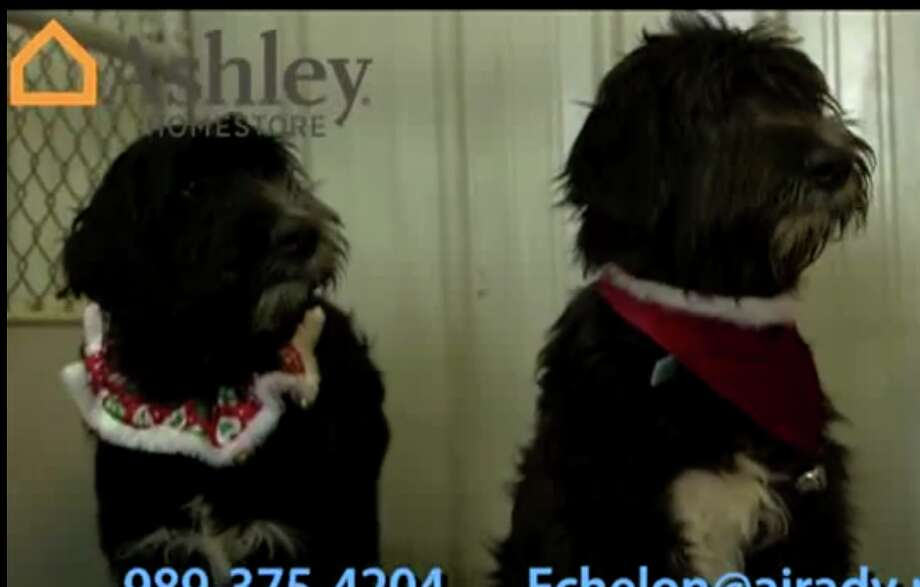 Jake and Moose are featured in the Pet of the Week video.