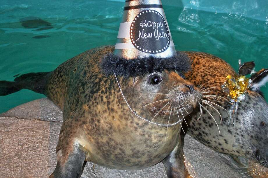 The Maritime Aquarium in Norwalk will extend its hours for a special New Year's Eve celebration for families on Saturday, Dec. 31, from 3 to 7 p.m. Photo: Maritime Aquarium / Contributed Photo