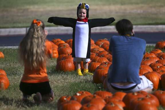 Joseph Dahl-Lacroix (facing away, right) takes a picture Wednesday October 26, 2016 of Luke Cyr,3, in the pumpkin patch at Alamo Heights United Methodist Church. Dahl-Lacroix is one of Cyr's nannies who was taking pictures for Cyr's grandmother. On the left is Dahl-Lacroix's fiance Mackenzie Boeckmann.