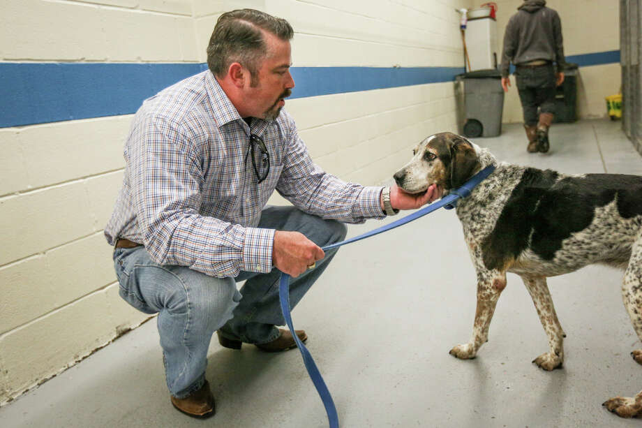 Director Charlie Jackson coaxes 8-year-old cattle dog Buddy out of a kennel on Friday, Dec. 23, 2016, at the Montgomery County Animal Shelter. Photo: Michael Minasi, Staff / © 2016 Houston Chronicle