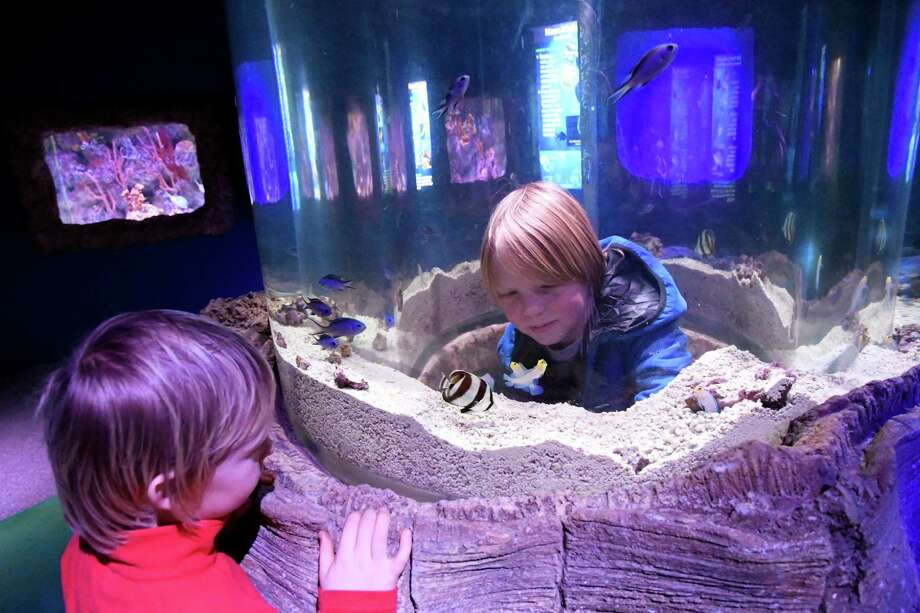 Sam Leon-Hansch, 10, of Amsterdam, center, watches Caribbean fish swim from inside the pop-up tank, which has a cave-like entrance, on Tuesday, Dec. 20, 2016, at Via Aquarium in Rotterdam, N.Y. At left is his brother Oakley Leon-Hansch, 9. (Cindy Schultz / Times Union) Photo: Cindy Schultz / Albany Times Union