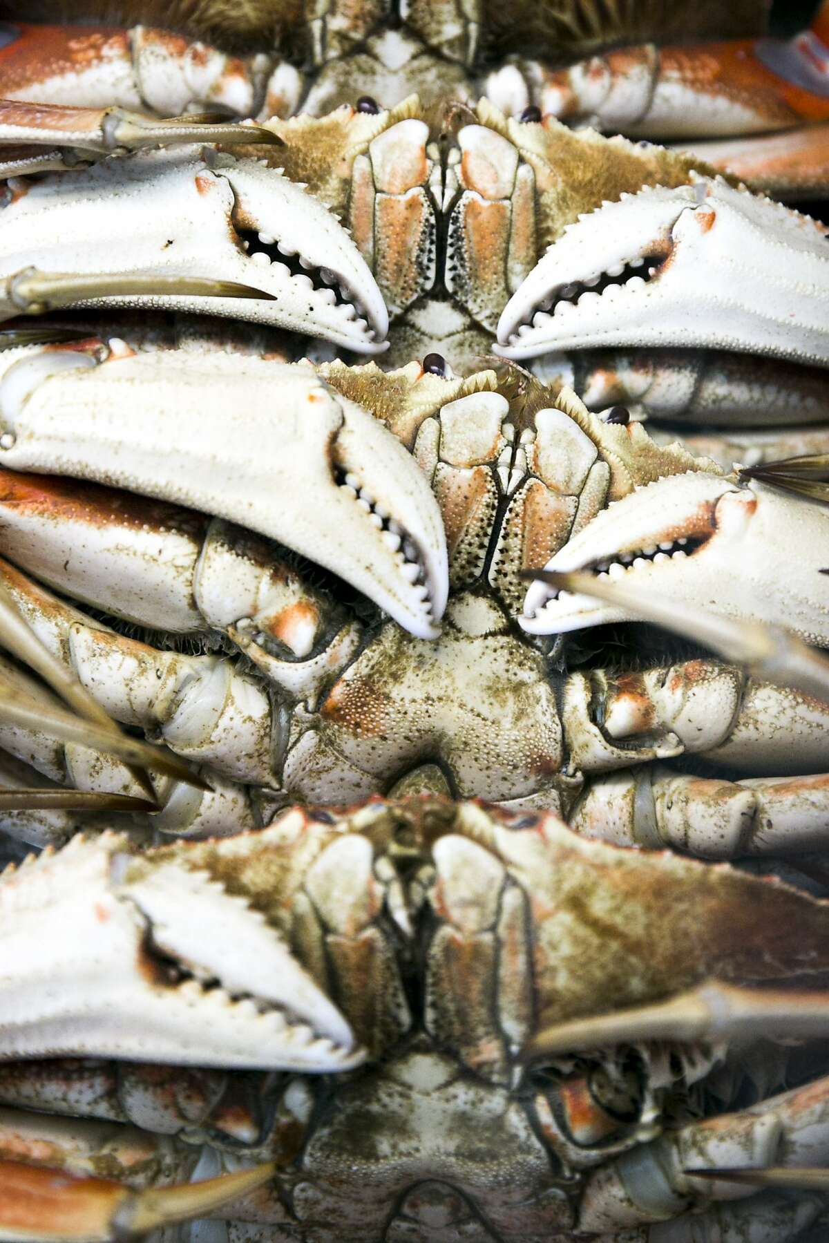 The last closed stretch of Dungeness crab commercial fishing grounds in Northern California will open on Monday, wildlife officials said.