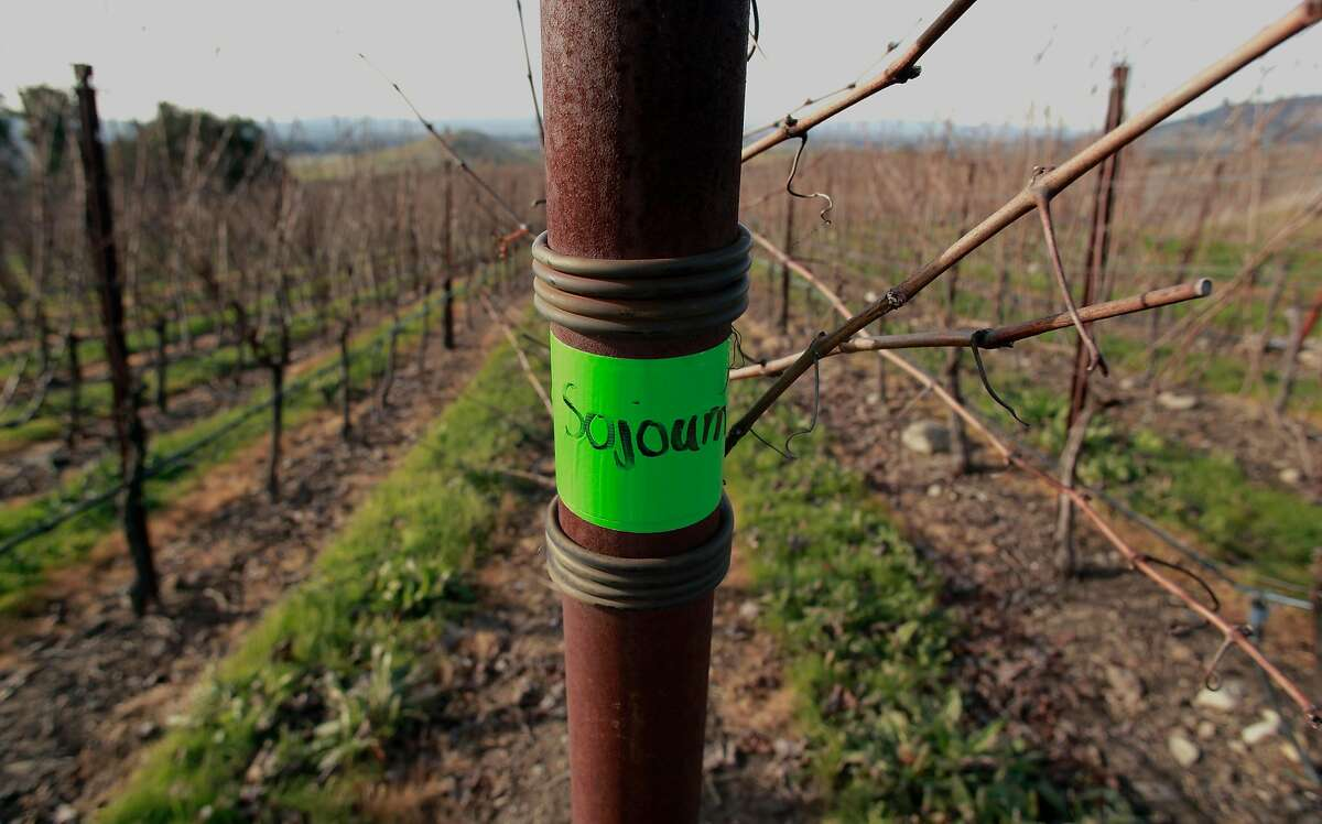 Sojourn Cellars uses Pinot Noir wine grapes grown at the Gap's Crown Vineyard in Pengrove, California, as seen on Tuesday December 27, 2016.