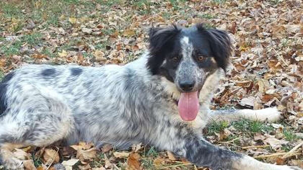 Spots is one of dozens of animals adopted through a $5,000 donation to Forsyth Humane Society in Winston-Salem, N.C. The facility declared its kennels empty on Dec. 27, 2016.